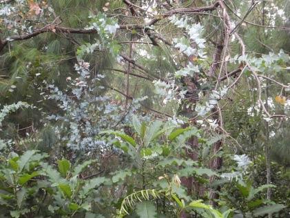 Foto: endemischer Wald